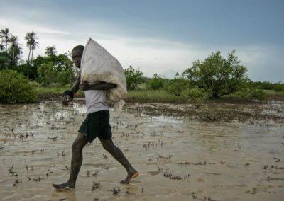 Collecte de propagules dans la mangrove ©LesAteliersPIXEL