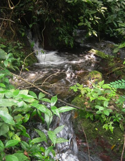 Le ruisseau des Bateke ©LesAteliersPIXEL