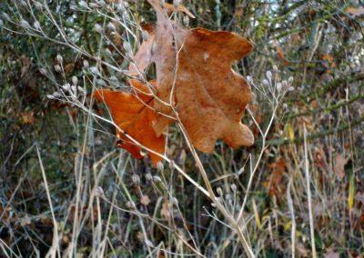 Restes d'automne ©LesAteliersPIXEL