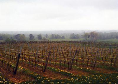 Un matin de printemps dans les vignes d'Anjou ©LesAteliersPIXEL