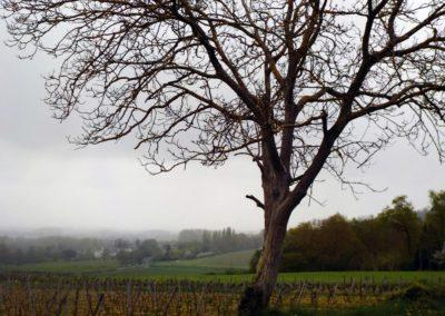 Un arbre qui surveille son décor ©LesAteliersPIXEL