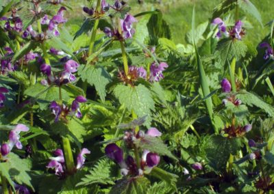 Mes petites fleurs violettes ©LesAteliersPIXEL