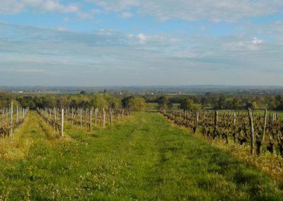 Paysage de vignes dans la vallée de la Loire ©ateliersPIXEL