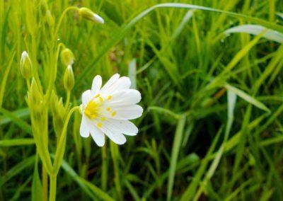Fleur de printemps ©LesAteliersPIXEL