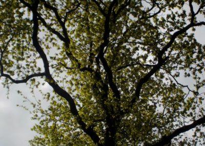 La repousse des feuilles au printemps ©LesAteliersPIXEL