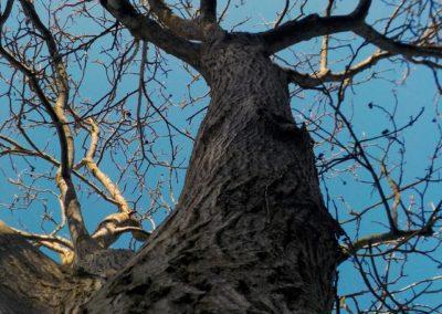 Au pied d'un arbre ©LesAteliersPIXEL