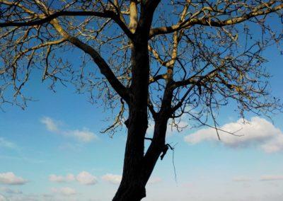 Un arbre qui touche le ciel ©LesAteliersPIXEL