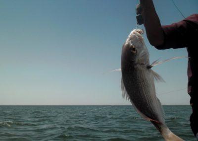 Pêche au large ©LesAteliersPIXEL