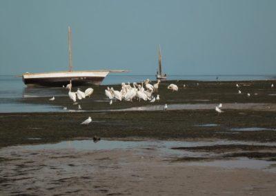 Paysage à marée basse - Village d'Iwik ©LesAteliersPIXEL