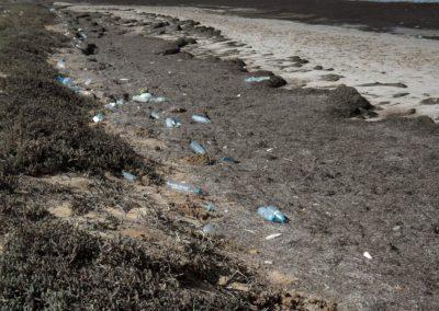Beaucoup de déchets s'accumulent sur nos plages ! ©LesAteliersPIXEL