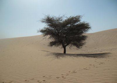La solitude d'un arbre dans le désert ©LesAteliersPIXEL