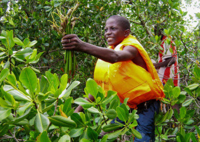 Récolte de propagules dans la mangrove. L'affaire de tous ©LesAteliersPIXEL