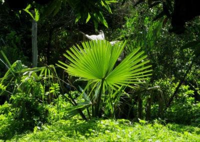Décor de Casamance ©LesAteliersPIXEL