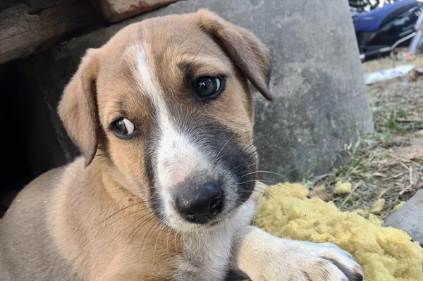 Portrait d'un petit chien