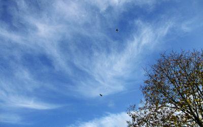 Des oiseaux dans le ciel