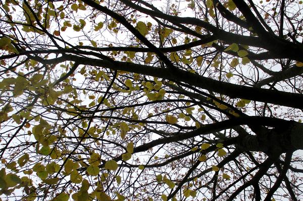 Un arbre s'envole