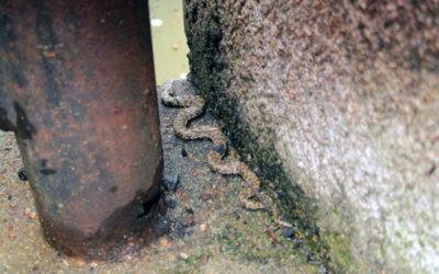 Le petit serpent